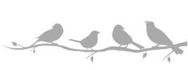 鳥さん(英)